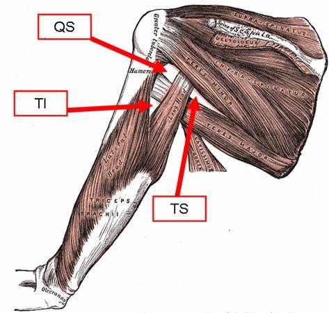 shoulder spaces