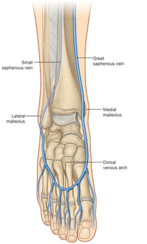 Blood Supply To The Foot Foot Ankle Orthobullets