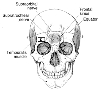 http://upload.orthobullets.com/topic/2019/images/safe zones showing nerves_moved.jpg