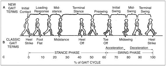 http://upload.orthobullets.com/topic/7001/images/gait cycle.jpg