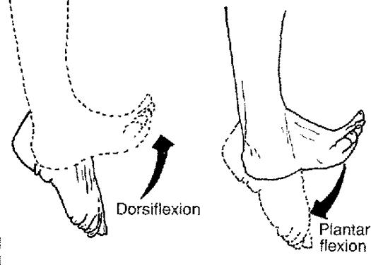 http://upload.orthobullets.com/topic/7005/images/plantar flexion_moved.jpg