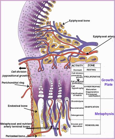 Physeal Considerations Pediatrics Orthobullets