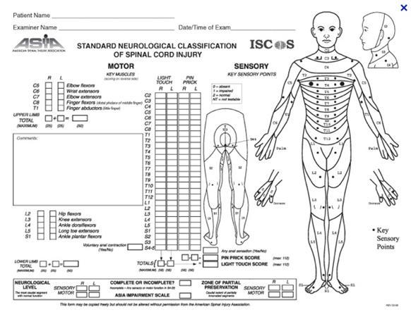 traumatic spinal cord injury pdf