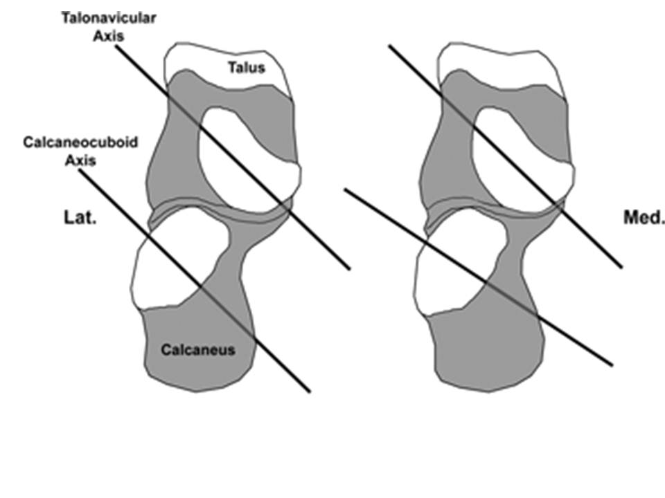 Foot Anatomy and Biomechanics - Foot & Ankle - Orthobullets