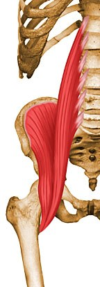 https://upload.orthobullets.com/topic/10053/images/psoas.jpg