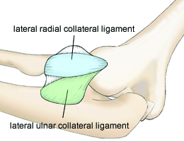 https://upload.orthobullets.com/topic/1021/images/Figure 1 - Ligaments copy_moved.jpg