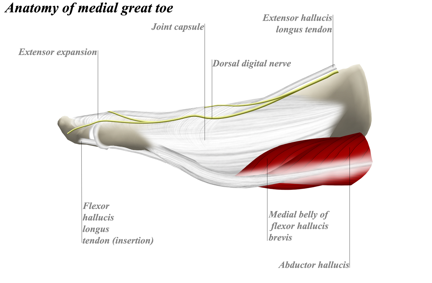 Dorsomedial Approach To Mtp Joint Of Great Toe Approaches