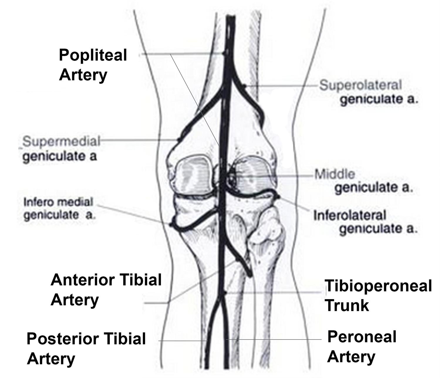 diagram of the back of foot