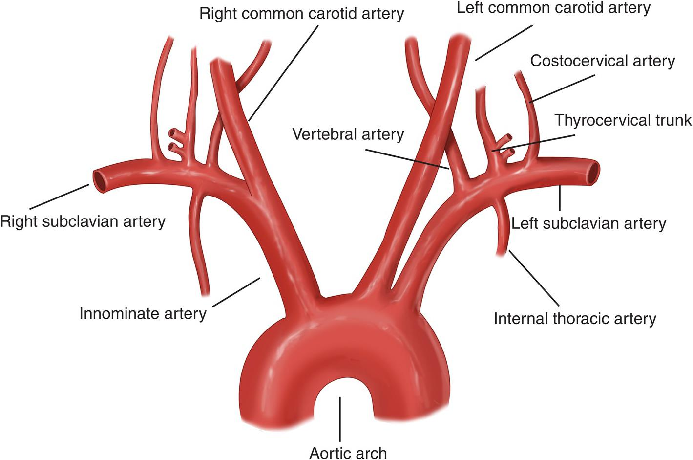 https://upload.orthobullets.com/topic/12302/images/subclavian_artery_anatomy.jpg