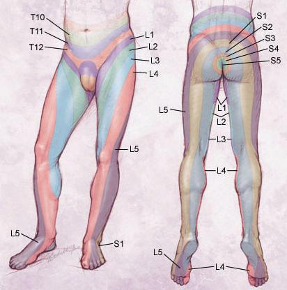Lower Extremity Spine & Neuro Exam - Spine - Orthobullets