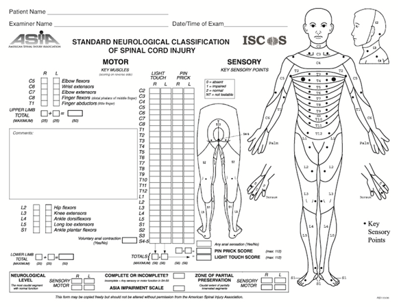 spinal cord injuries - spine