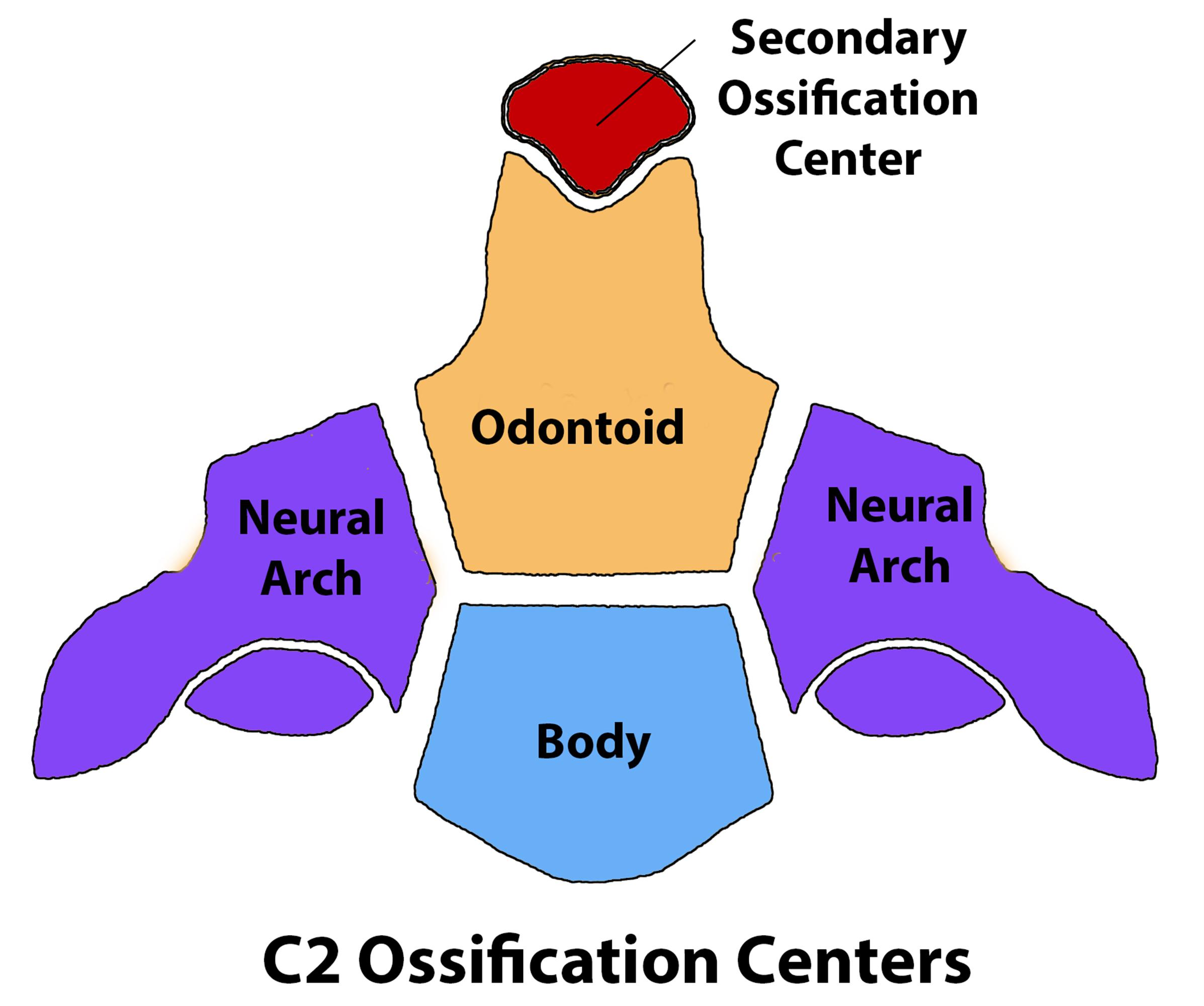 Cervical Spine Anatomy - Spine - Orthobullets