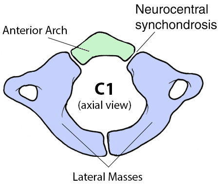 Cervical Spine Anatomy Spine Orthobullets