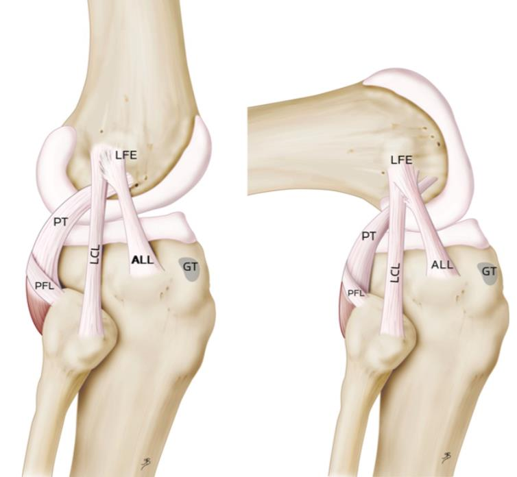 Ligaments of the Knee - Knee & Sports - Orthobullets