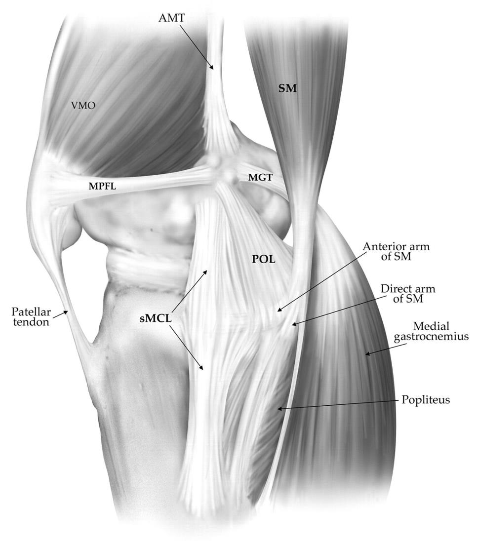 Patellofemoral Joint - Knee & Sports - Orthobullets