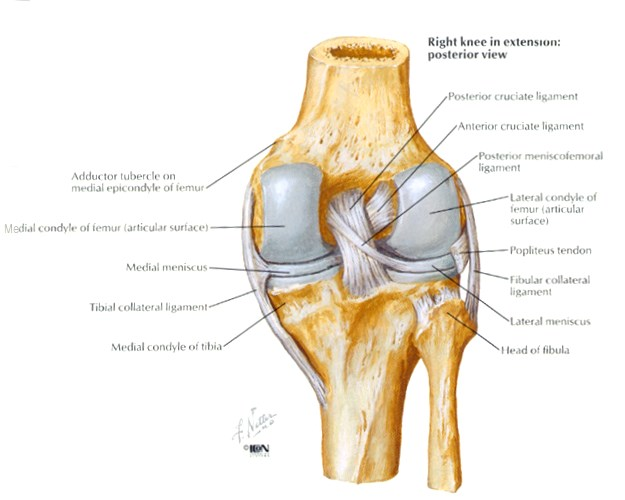 Pcl Injury Knee Sports Orthobullets