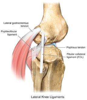 Lcl injury of the knee knee sports orthobullets ccuart