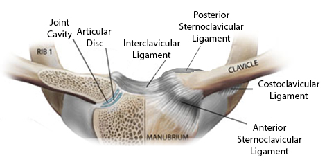 Image result for sternoclavicular joint