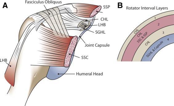 Adhesive Capsulitis Frozen Shoulder Shoulder Elbow Orthobullets