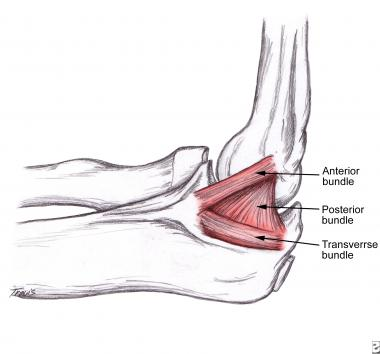 Elbow Anatomy Biomechanics Shoulder Elbow Orthobullets