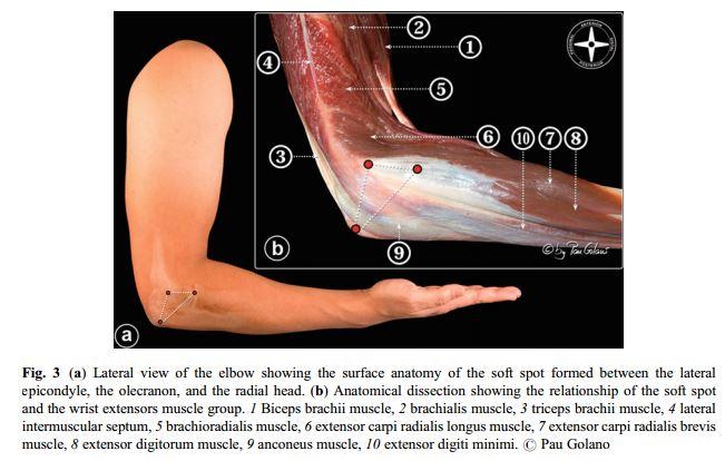 Elbow Anatomy & Biomechanics - Shoulder & Elbow - Orthobullets