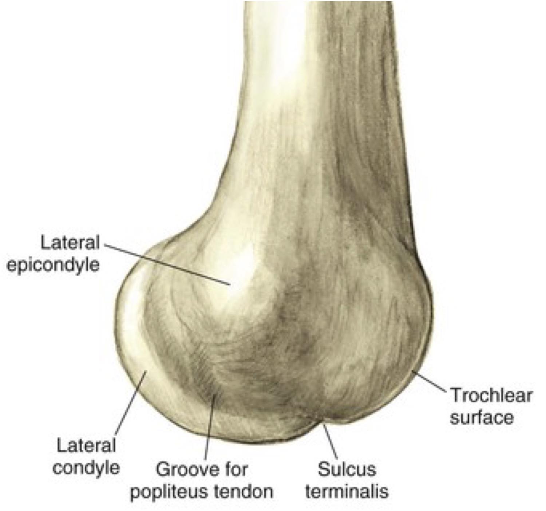 Adult Knee Trauma Radiographic Evaluation - Trauma - Orthobullets