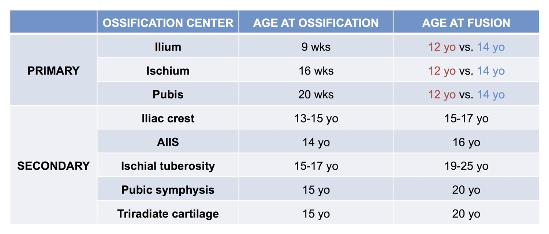 Ossification of the pelvis