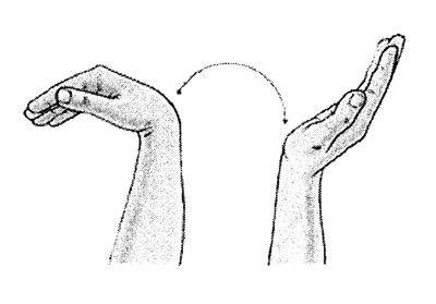 https://upload.orthobullets.com/topic/4002/images/wrist move (midfordathleticclub.org).jpg