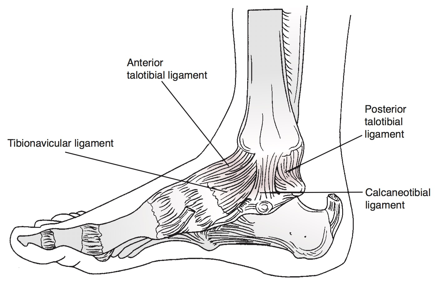 Ankle Fractures - Pediatric - Pediatrics - Orthobullets