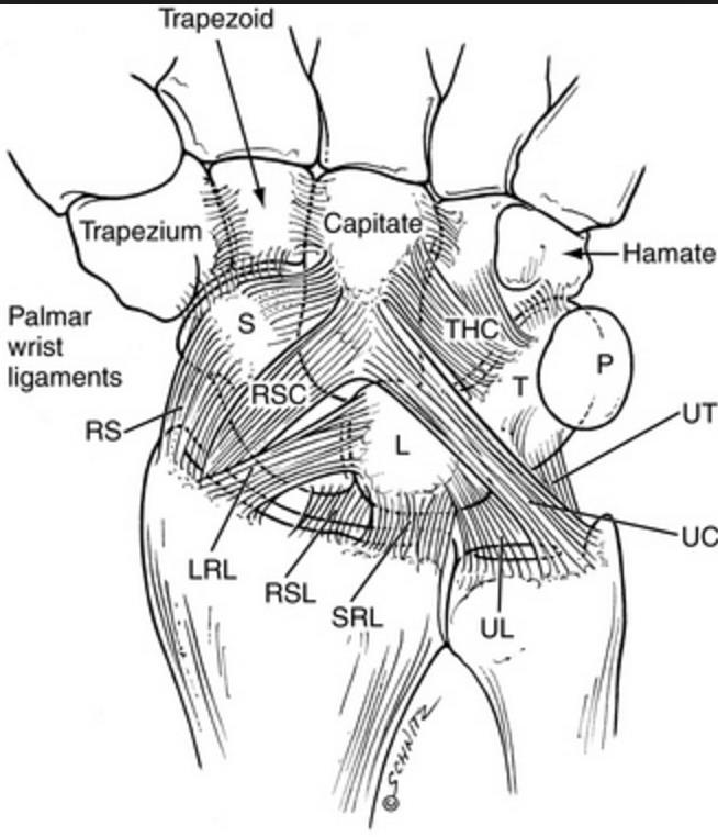 Wrist Ligaments Biomechanics Hand Orthobullets