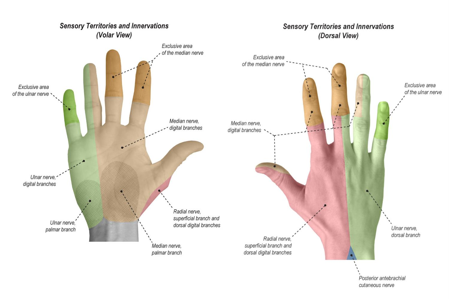 Physical Exam of the Hand - Hand - Orthobullets