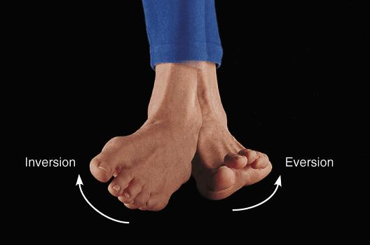 Foot Anatomy And Biomechanics Foot Ankle Orthobullets