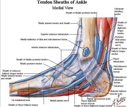 Posterior Tibial Tendon Insufficiency PTTI Foot Ankle