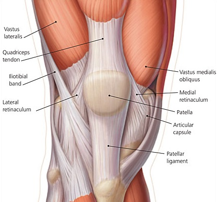 Image result for Knee biomechanics