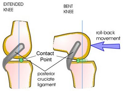 knee femur diagram knee biomechanics recon orthobullets  knee biomechanics recon orthobullets